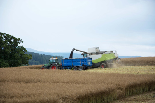 combine harvester filling a tractor and trailer with black coloured grain