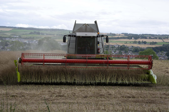 face on view of combine harvester which has just cut linseed stalks