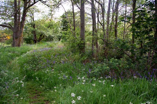 Woodland path will lots of wildflowers