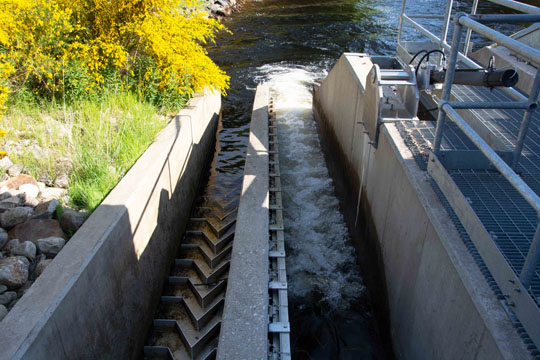 a fish ladder at the side of the hydro scheme