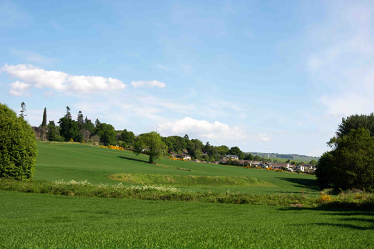 View of Maryburgh from the field edge path with the memory trees on the left