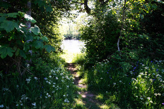 a cutting in the vegetation gives a glimpse of the river Conon