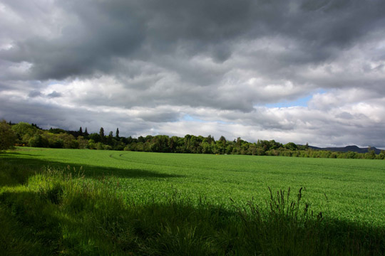 green pastures in foreground with trees in background, including the very tall memory trees