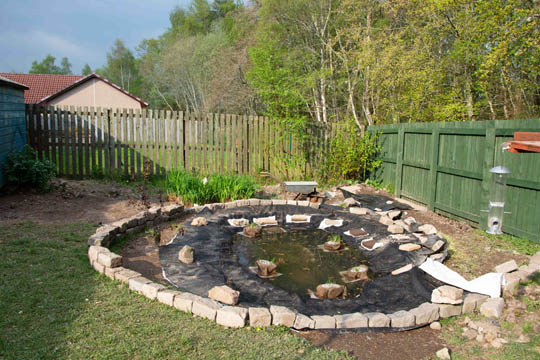 Pond with planting started