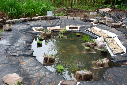 gravel trays, plants and water pump now in the pond