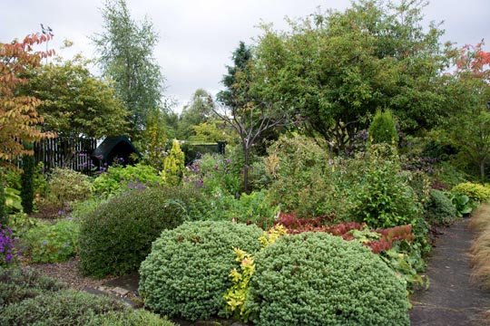 bushes and shrubs with some of the plants displaying autumn colours