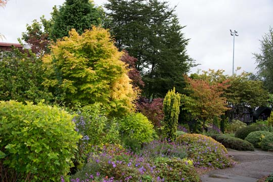 bright autumn colours on trees and bushes