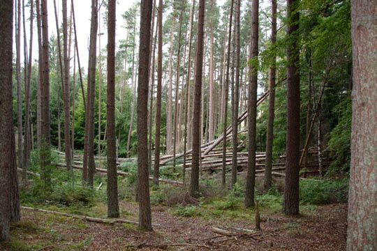 Fallen trees in the woodland