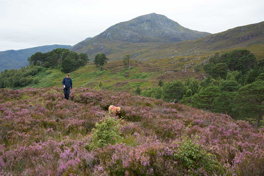 Ian and Willow walking through heather
