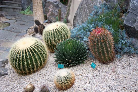 A variety of spikey cactus plants