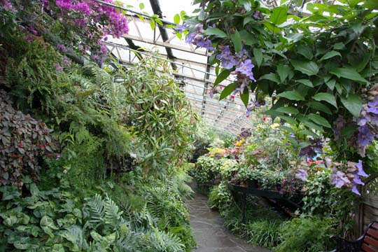 A full length view of the tropical house with coloured flowers