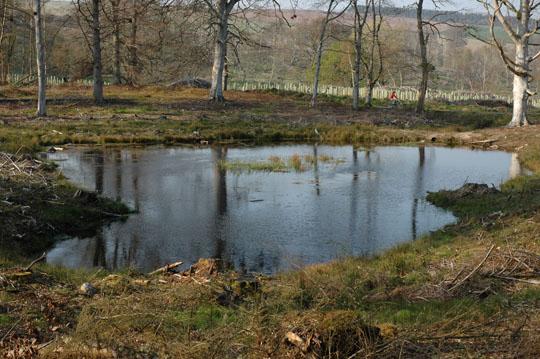 Willows favourite pond - photo April 2005