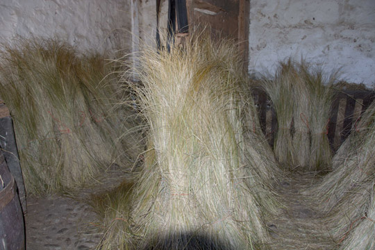 Bunches of marram grass waiting to be put onto a roof