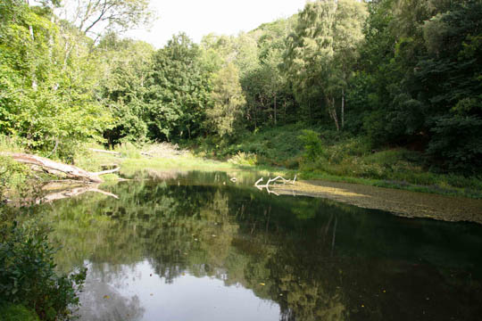 sunlit mill pond surrounded by trees