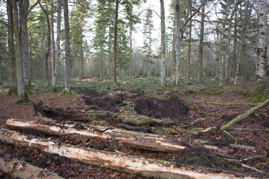 a new path made by the woodcutting machines