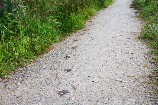 path with pawprints