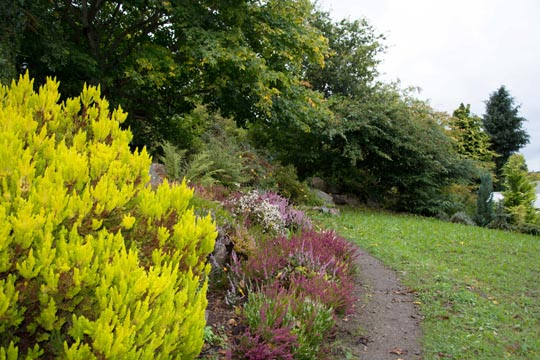 Colourful heather at the rock garden