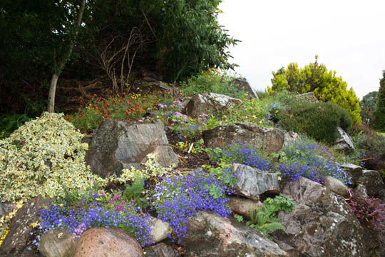 a rock garden full of colourful plants