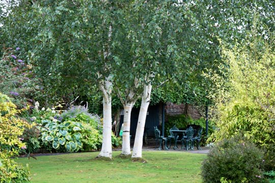 secluded corner with a table and chairs in the background with 3 trees with white trunks