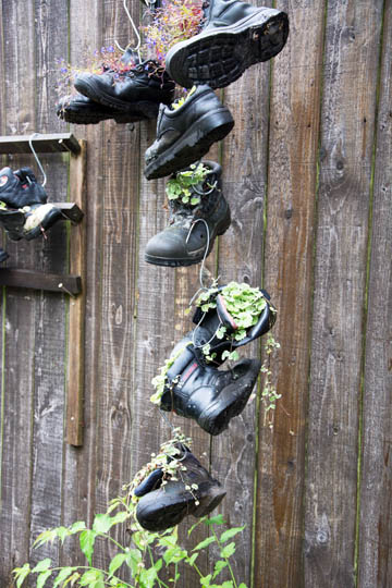 Old boots hanging beside a wooden background. Each boot contains a plant