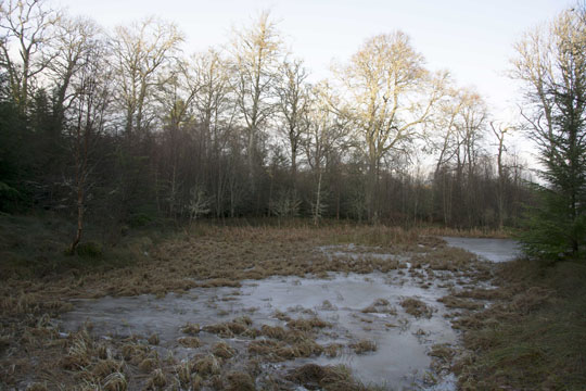 a big pond in the woodland - photo December 2017