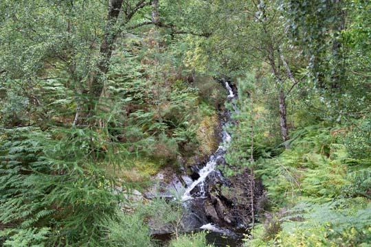 Waterfall at Contin woodland