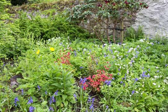 The wildflower garden